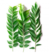 کری پتہ گڈی  (Curry Leaves)